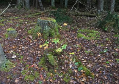 A tree stump covered in moss in the woods