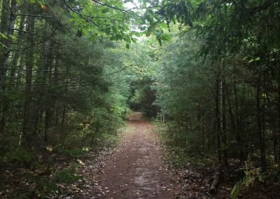Just an ordinary walking trail through the woods - or is it?