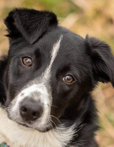 puppy, dog, pet photography